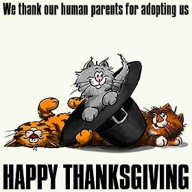 http://consciouscat.net/wp-content/uploads/2009/11/design_thanksgiving_cats_wh.jpg