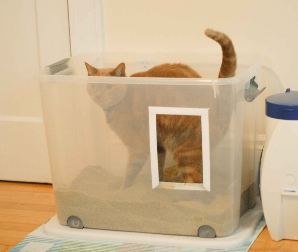 What To Do When Your Cat Is Not Using The Litter Box