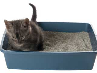Cat Not Peeing In Litter Box