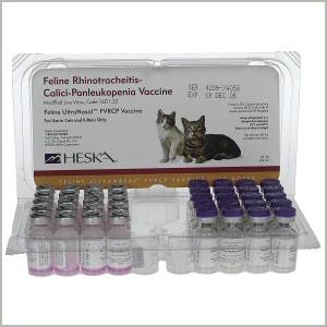 feline vaccine