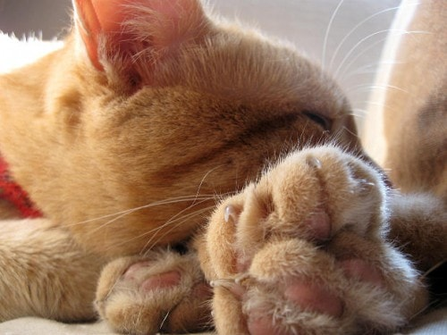 Trim Your Cat S Nails The Right Way And Nobody Gets Hurt