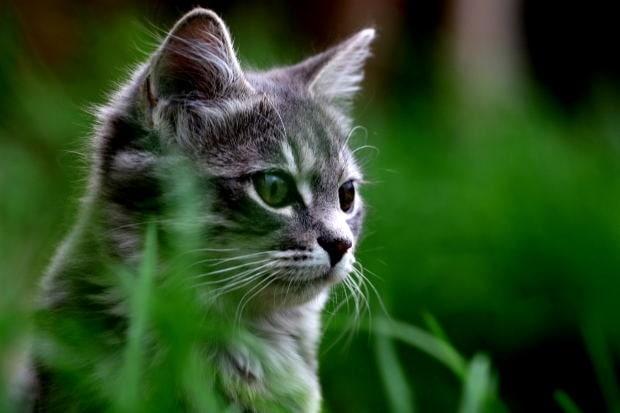 Suffixes Warrior Cats Sun