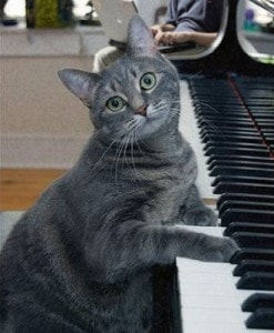 Nora the piano cat