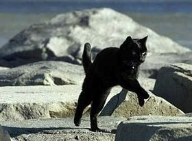 Roadrunner Michael Greenblatt running cat