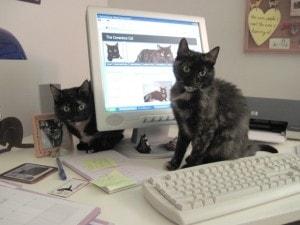 cats-computer-keyboard-monitor