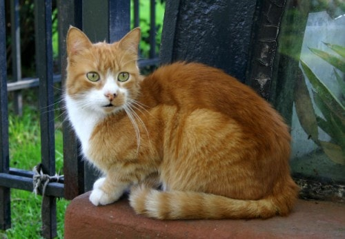 keeping outdoor cats safe from predators