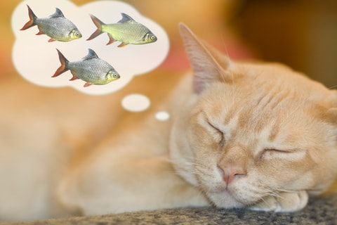 Does your cat love fish for Dream about fish