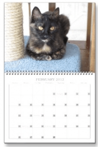 The Conscious Cat 2012 Wall Calendar