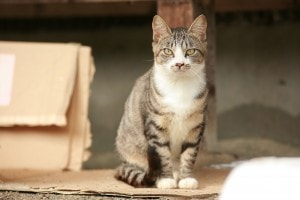 cat-fukushima-evacuation-zone