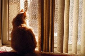 cat-at-window