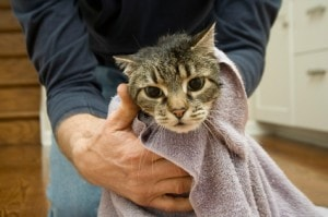 cat_wrapped_in_towel
