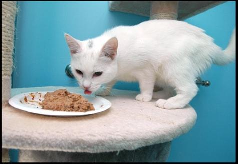 Carrageenan In Cat Foods