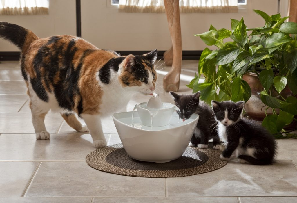 Lotus Food For Cats
