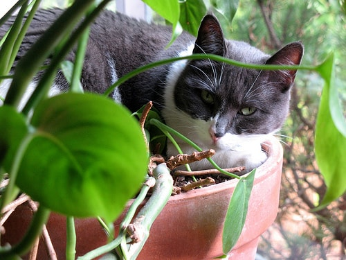 Plants and foods that are toxic to cats Houseplants not toxic to cats