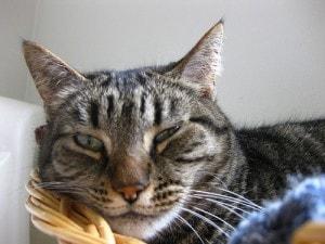senior_cat
