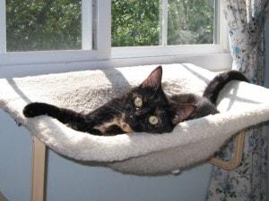 cat_on_window_seat