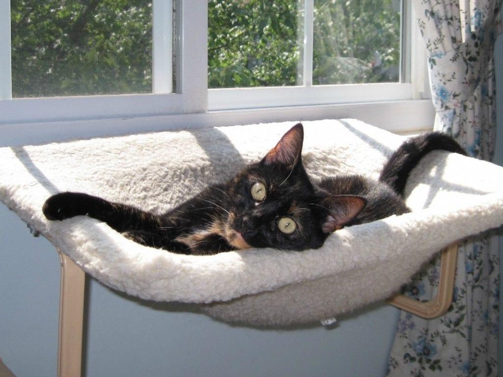 Cat Window Perch Plans Images