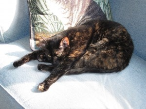 yoga_cat