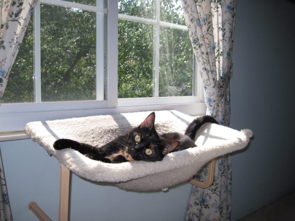 Unique Kitty Cat Furniture With Hammock further Perfect Perch Cat Window Seat further Petsafecatveranda together with Porch Hammock Swing Cat Window Perch Magnolia Hammock Chair additionally ka abana. on cat window perch
