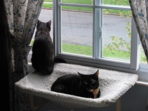 Ruby and Allegra on window perch