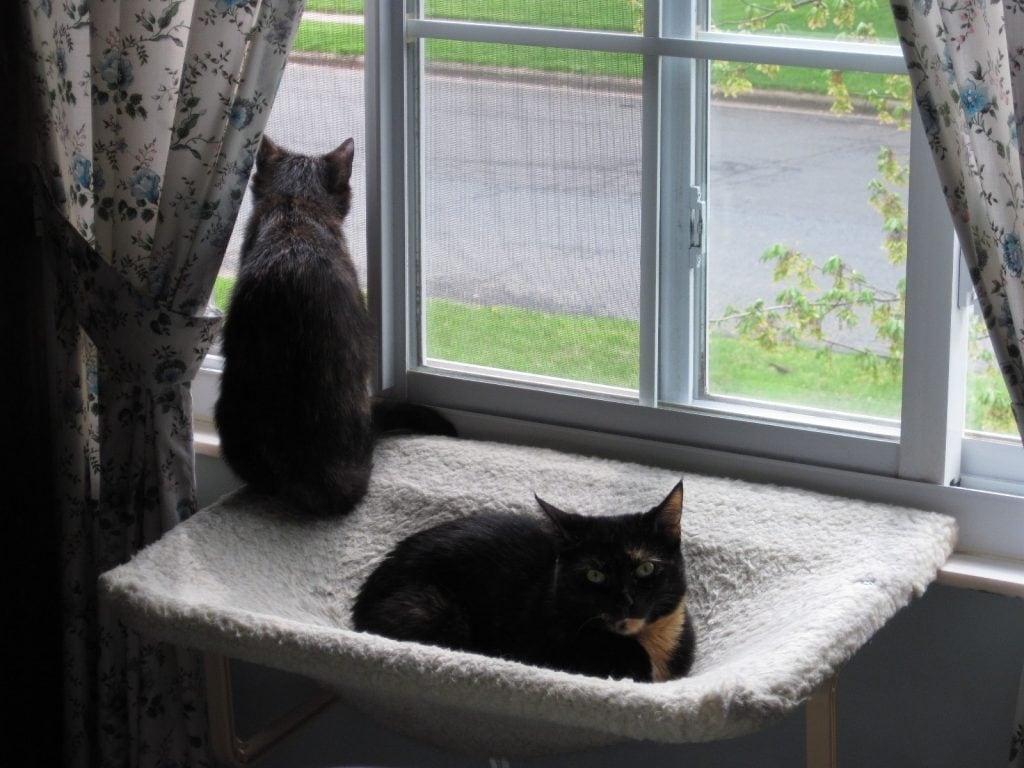 allegra 39 s world new window perch. Black Bedroom Furniture Sets. Home Design Ideas