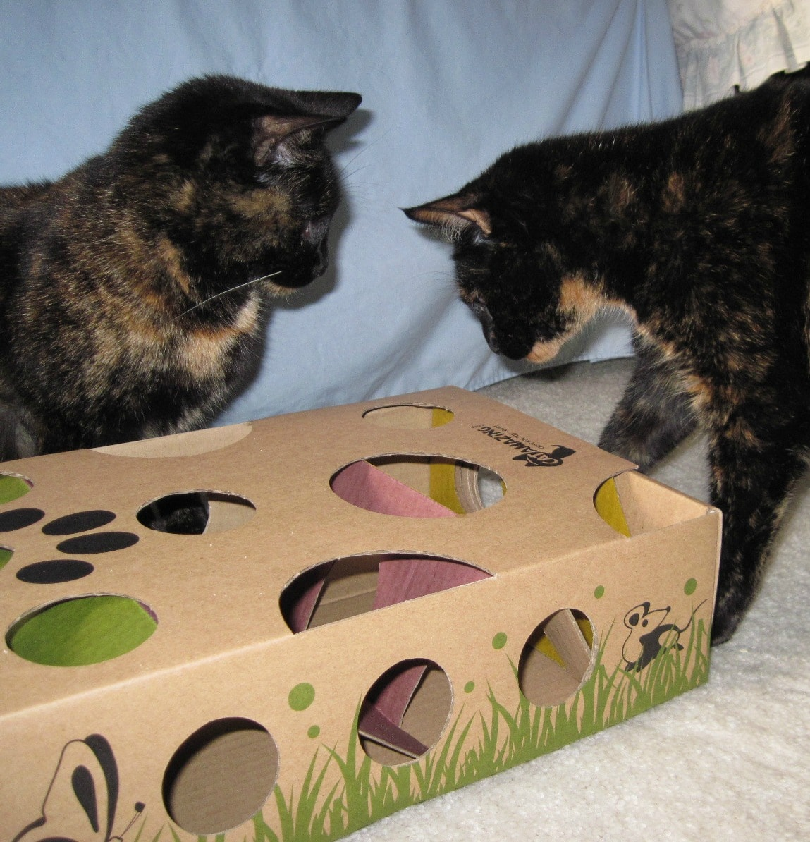 Toys For Cards : Interactive puzzle toys for smart cats