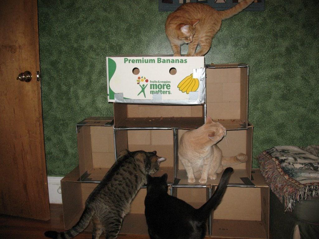 Diy Cardboard Cat House Viewing Gallery