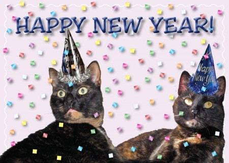 Happy New Year Cat Happy New Year 2013