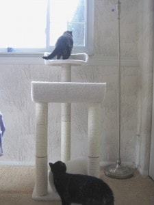 cat tree test