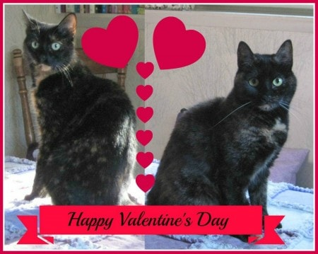 Valentine's Day 2013 with border
