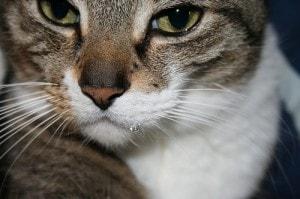 drooling_cat