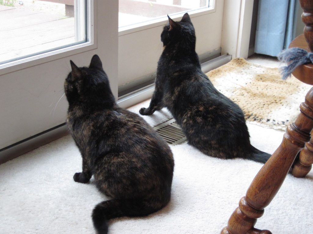 Cats and birds: the joys of birdwatching for indoor cats