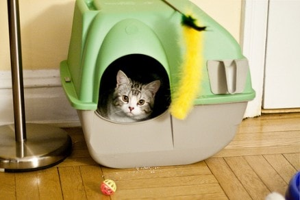 cat_in_litter_box