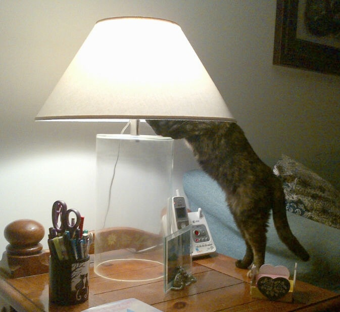 Ruby S Reflections Ruby And The Lamp Shade The