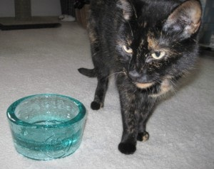 Review Pawnosh Glass Pet Bowls The Conscious Cat