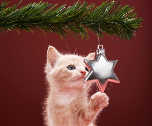 Image result for christmas cat pictures