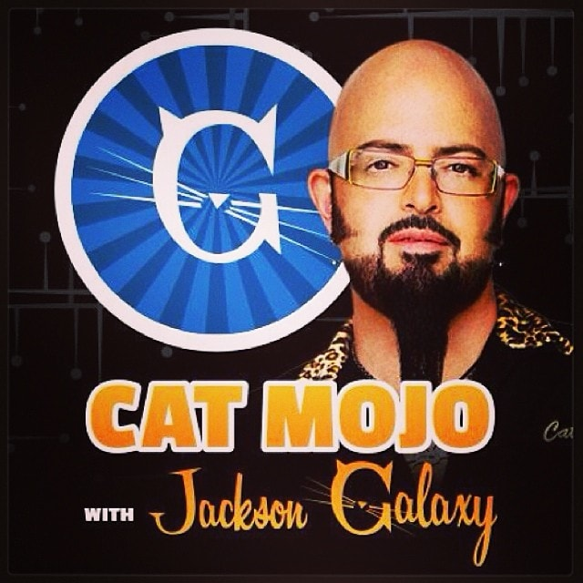 Cat mojo with jackson galaxy premieres today the for Mojo jackson