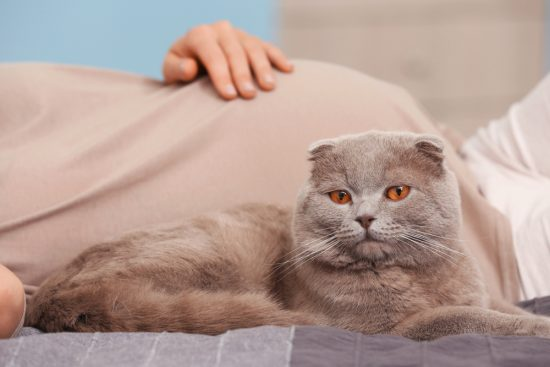 you don't need to give up your cat when you're pregnant  the conscious cat