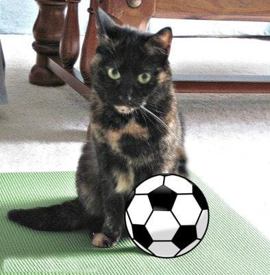 cat_soccer