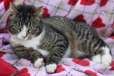 holistic treatments for fiv positive cats the conscious cat