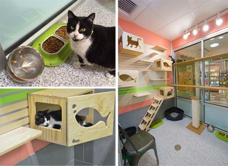 Mews And Nips Catification At The Humane Society Of