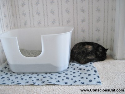 & The Optimal Litter Box for Your Cat - The Conscious Cat Aboutintivar.Com