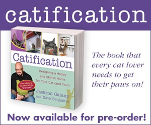 Kate's Catification ad 300x250