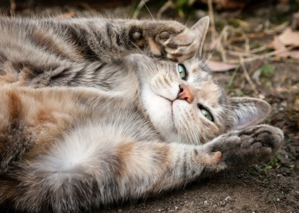 Probiotics: One of the Most Important Supplements for Your Cat - The Conscious Cat