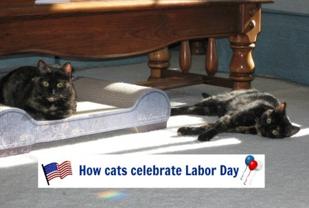 Labor_Day_cats