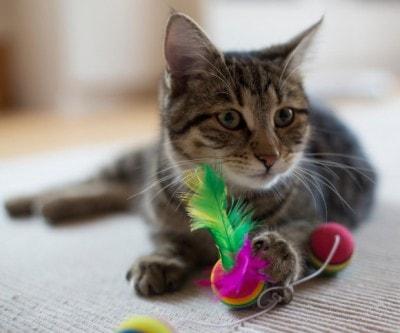 indoor_cat