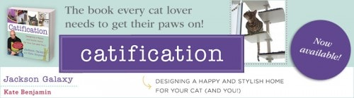 Catification banner for posts