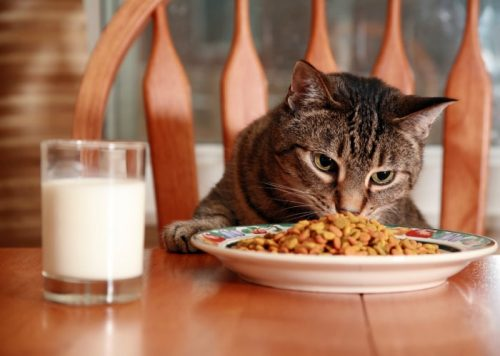 Can You Feed A Cat Dog Food In An Emergency