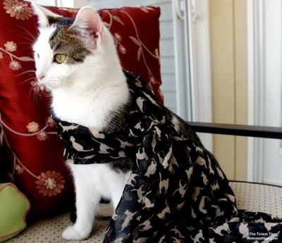 cat-scarf
