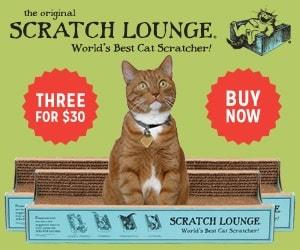 Concious-Cat-Ad-14